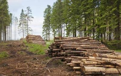 На Тячівщині посадовці організували незаконну вирубку дерев