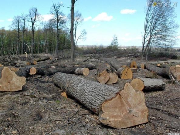Міжгірське лісогосподарське підприємство завдало збитків лісовим ресурсам на 226265 гривень