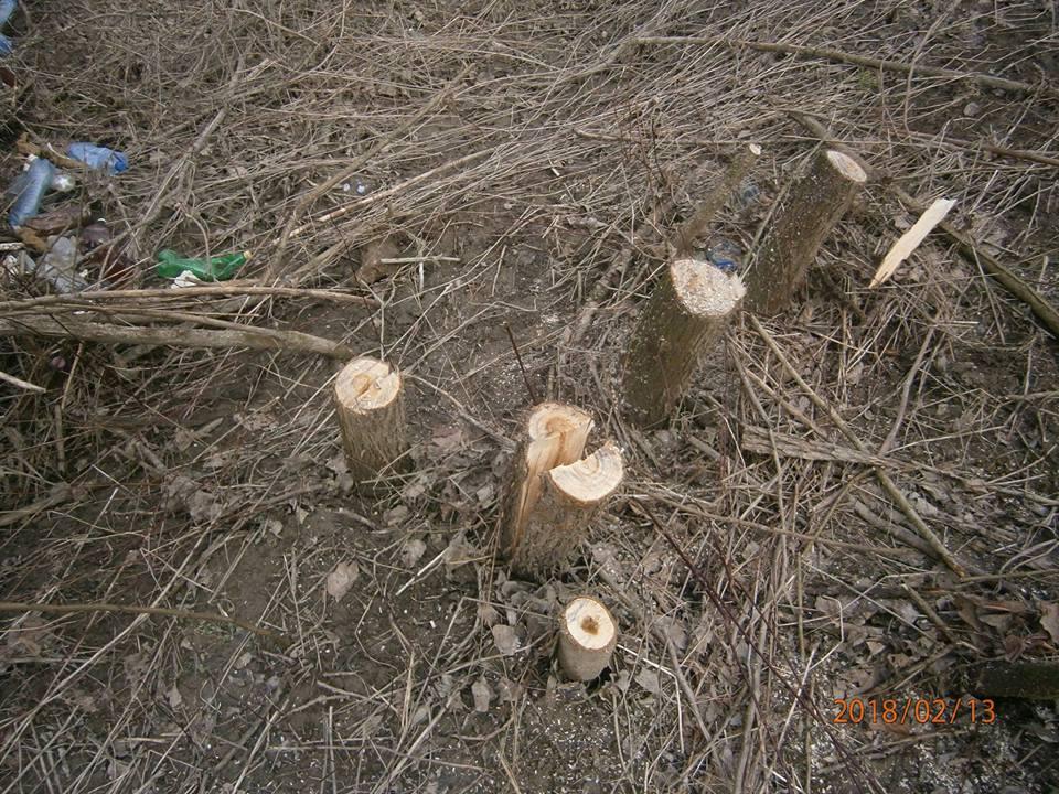 На Виноградівщині роми крали дрова в заповіднику