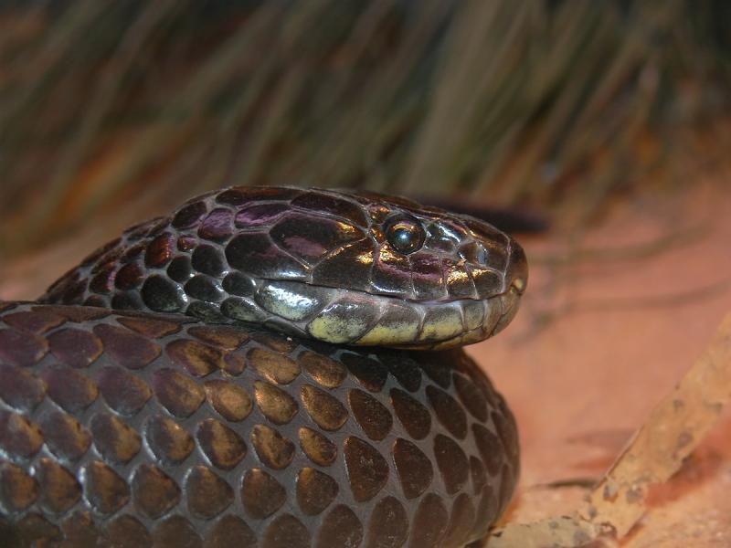 20-річну дівчину укусила змія в Карпатах