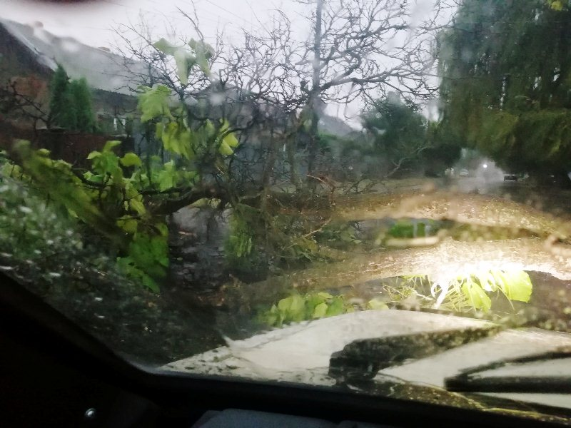 В Ужгороді дерево впало на дорогу