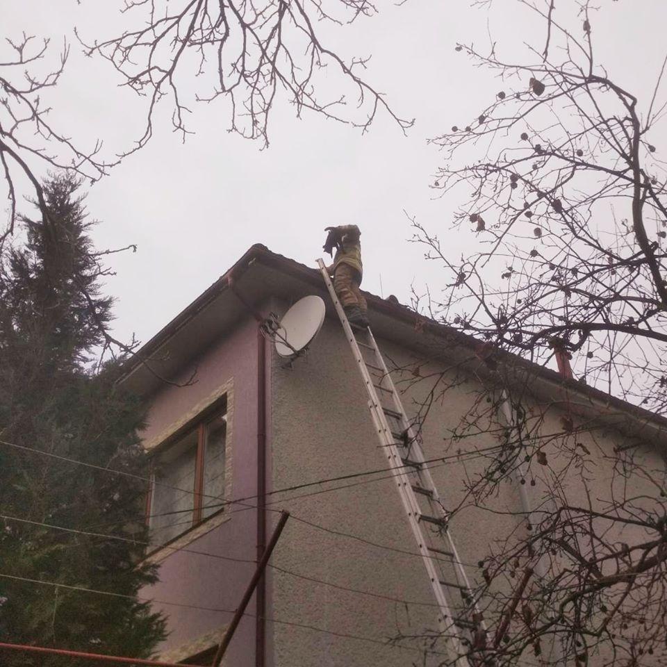 У Тячеві рятувальники зняли кішку з даху двоповерхового будинку. ФОТО